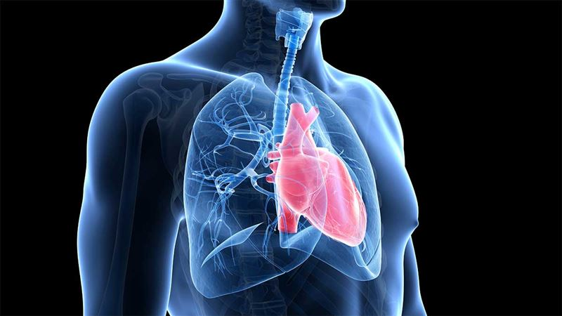 The SCAPIS study - a way to find new therapies for heart and lung diseases